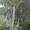 Удаление,  обрезка деревьев #1333287