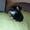 Щенки метисы домашние небольшие. - Изображение #3, Объявление #1700741