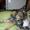 Щенки метисы домашние небольшие. - Изображение #2, Объявление #1700741