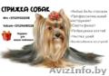 Стрижка-Груминг собак